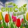 iquestc-oacutemo-crecen-las-plantas-2